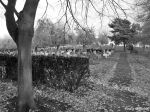 East Herringthorpe Cemetery, Rotherham - 20.11.13 (30)